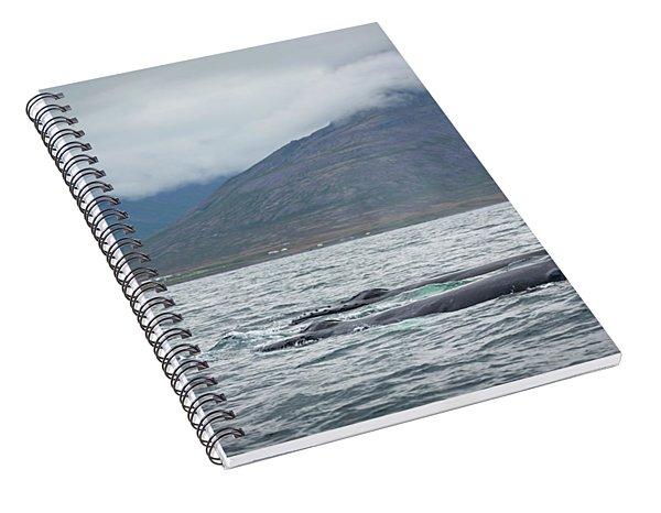 Humpback 5 Spiral Notebook