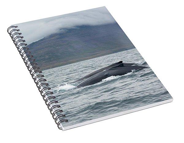 Humpback 6 Spiral Notebook