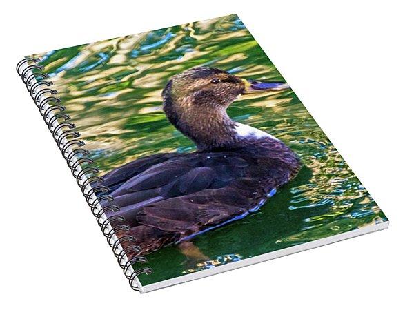 Hybrid Reflections Spiral Notebook