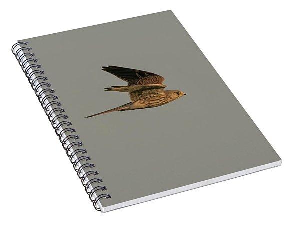 Kestrel Sundown Flyby Spiral Notebook