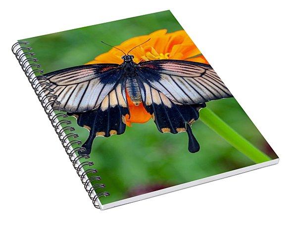 Kite Swallowtail  Spiral Notebook