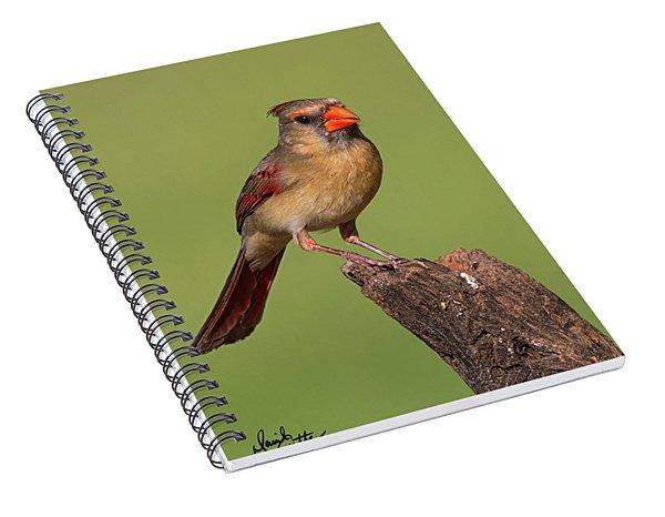 Lady Cardinal Spiral Notebook
