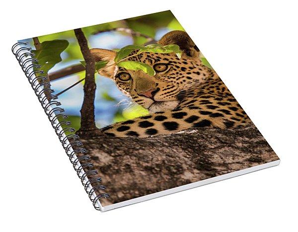 Lc11 Spiral Notebook