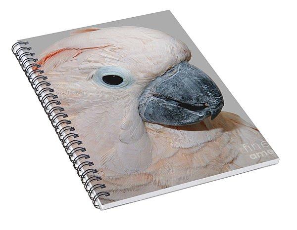 Moluccan Cockatoo Spiral Notebook