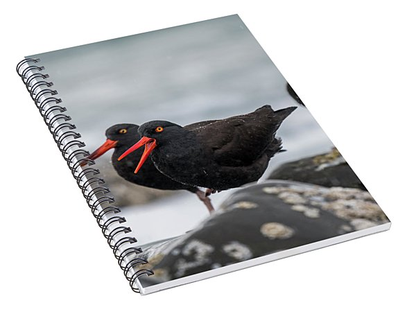 Oystercatchers In The Rain Spiral Notebook