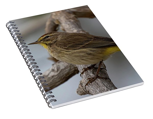 Palm Warbler Spiral Notebook