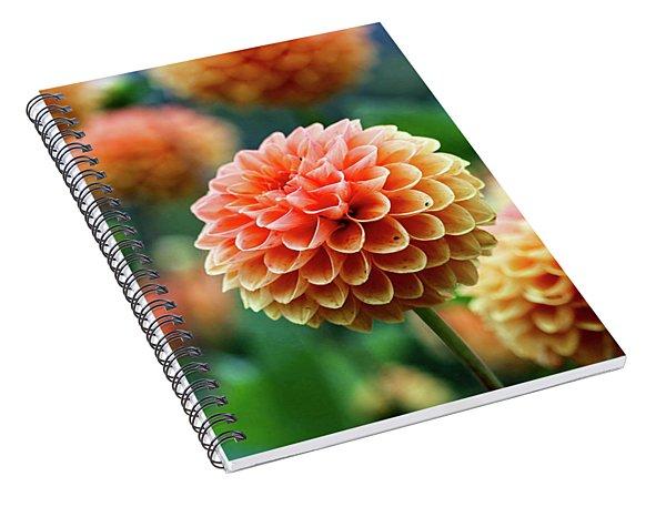 Peach Dahlias Spiral Notebook