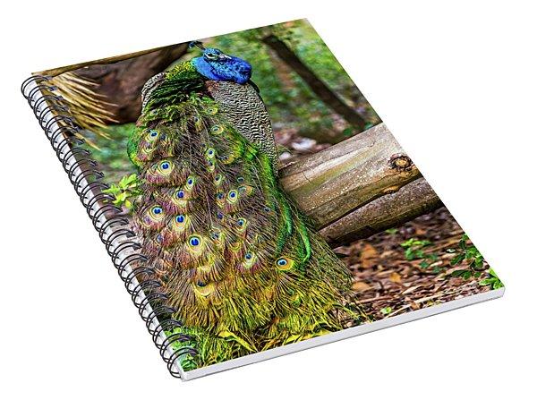 Peacock Watching Spiral Notebook
