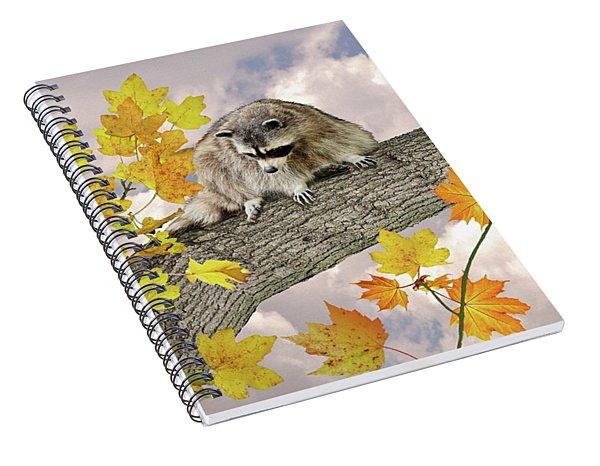 Raccoon In Maple Tree Spiral Notebook