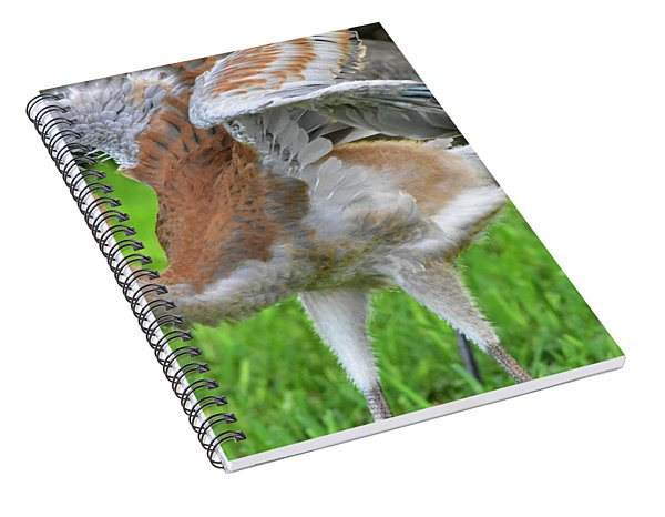 Sandy Crane Shows New Feathers Spiral Notebook