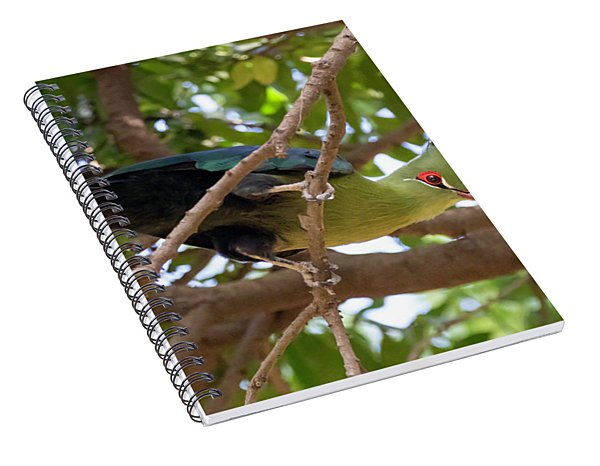 Schalow's Turaco Spiral Notebook