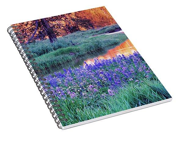 Silvery Lupine Spiral Notebook