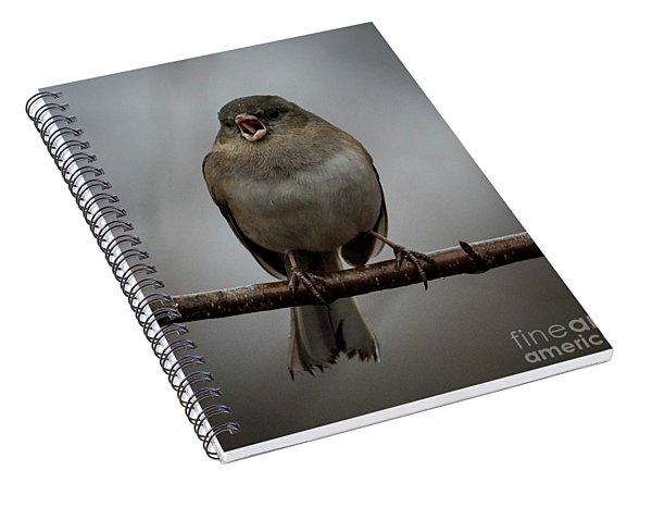 Singing Junco 2 Spiral Notebook
