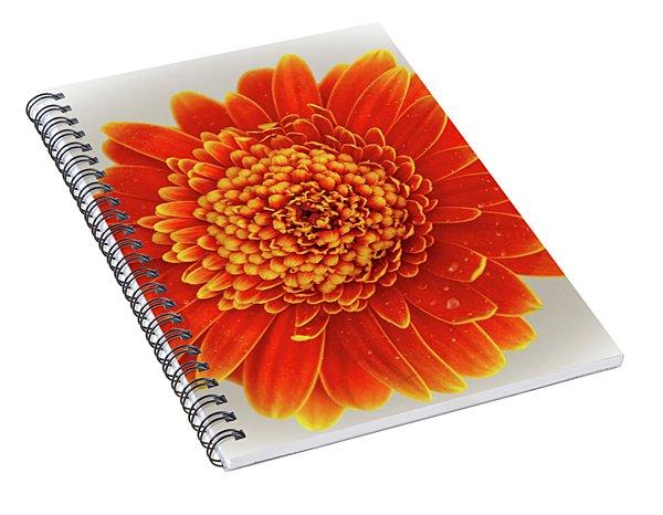 Soft Large Orange Gerber Daisy Spiral Notebook