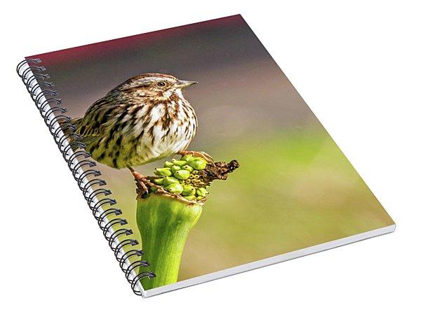 Songster Perching Spiral Notebook