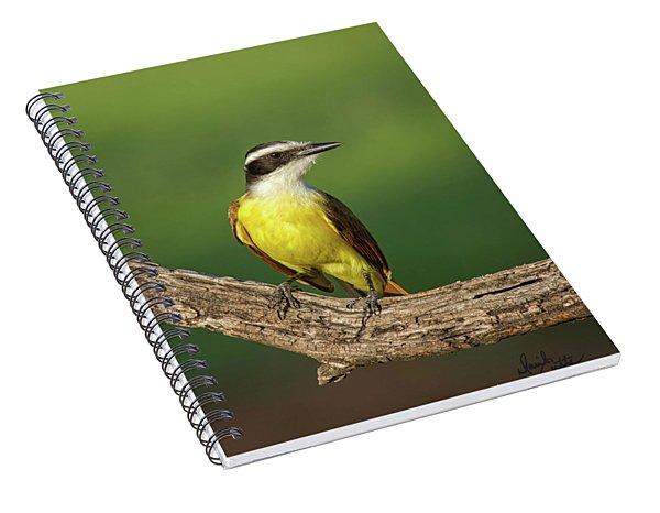 South Texas Great Kiskadee Spiral Notebook