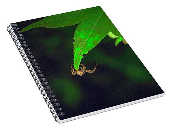 Spider At Night On A Leaf Spiral Notebook