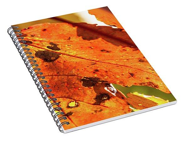 Spotted Red Leaf Spiral Notebook