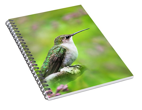 Spiral Notebook featuring the photograph Spring Beauty Ruby Throat Hummingbird by Christina Rollo