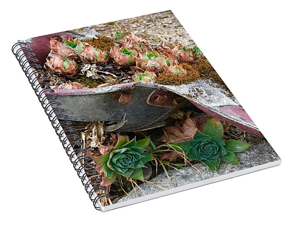 Succulents In A Boot Spiral Notebook