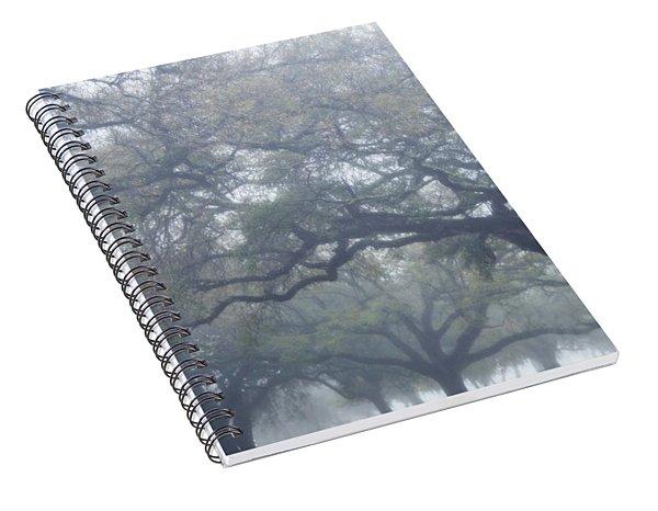 Texas Live Oaks In Fog Spiral Notebook