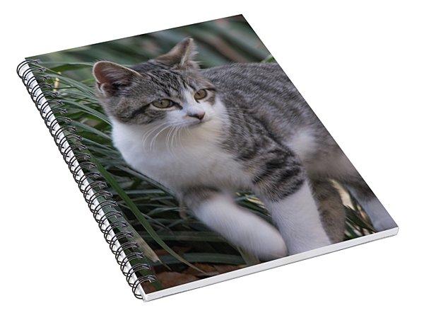 Tic Titc Spiral Notebook