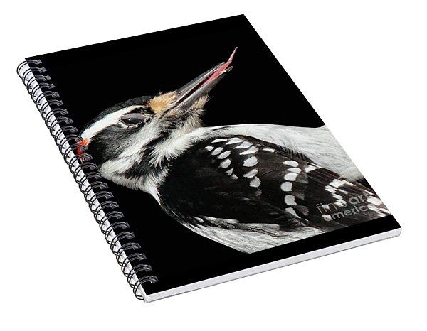 Tongue Of Woodpecker Spiral Notebook
