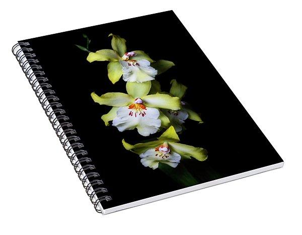 Yellow Cymbidium Spiral Notebook