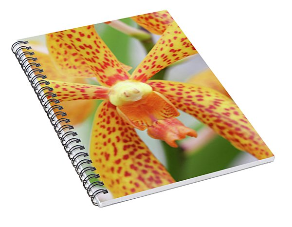 Yellow Spotted Spider Orchids Spiral Notebook
