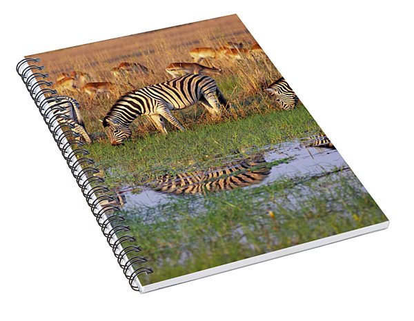 Zebras In Botswana Spiral Notebook