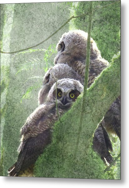 Harbingers Of Spring Metal Print