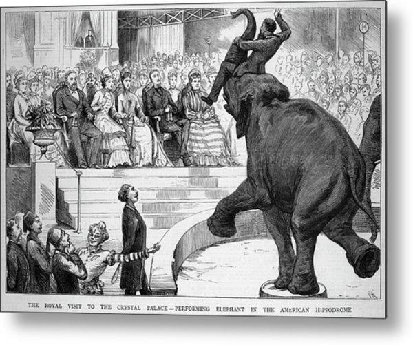 A Performing Elephant  Entertains Metal Print by Mary Evans Picture Library