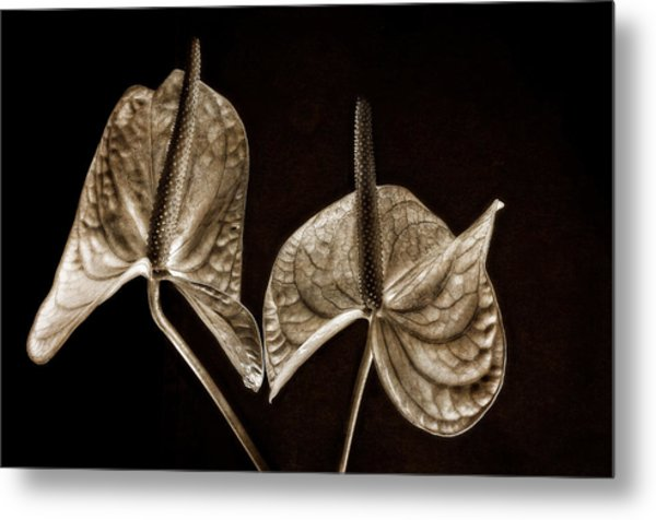 Anthurium 2 Metal Print