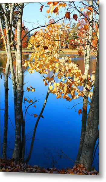 Autumn Trees On The Lake Metal Print