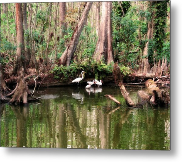 Cypress Swamp  Metal Print