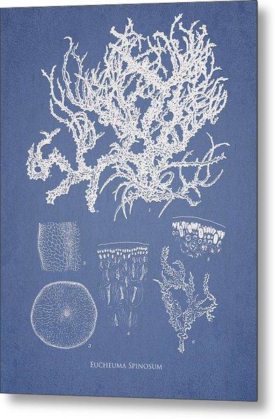 Eucheuma Spinosum Metal Print
