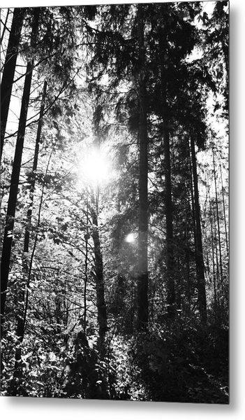 Forest Metal Print by Falko Follert