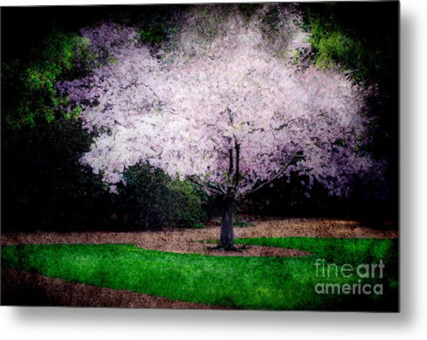 Ghostly Spring Metal Print by Bobbi Feasel