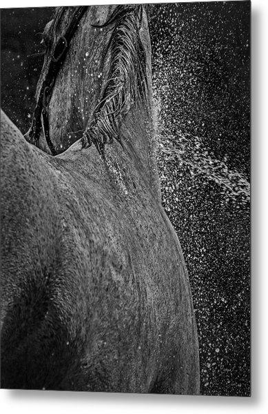 Horse Cool Off Metal Print