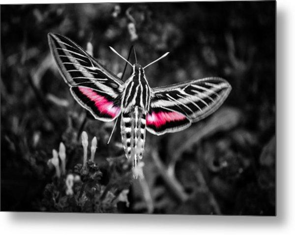 Hummingbird Moth Bw Print Metal Print