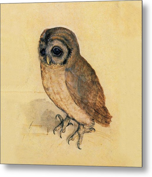Metal Print featuring the painting Little Owl by Albrecht Durer