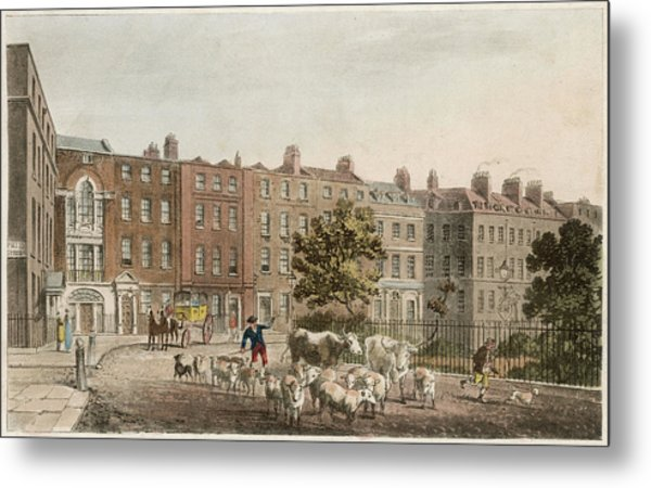 Soho Square, With Cattle         Date Metal Print by Mary Evans Picture Library