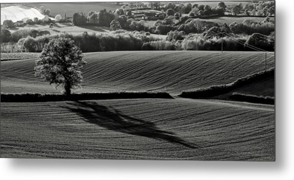 Tree And Shadow Metal Print