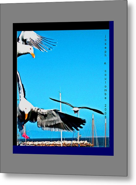 West Coast Sea Birds Metal Print