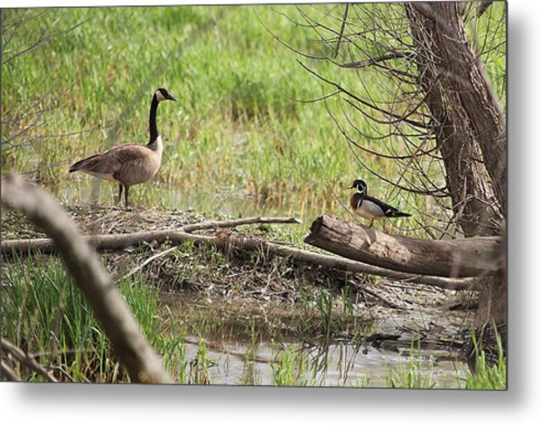 Wildlife Scenery Metal Print