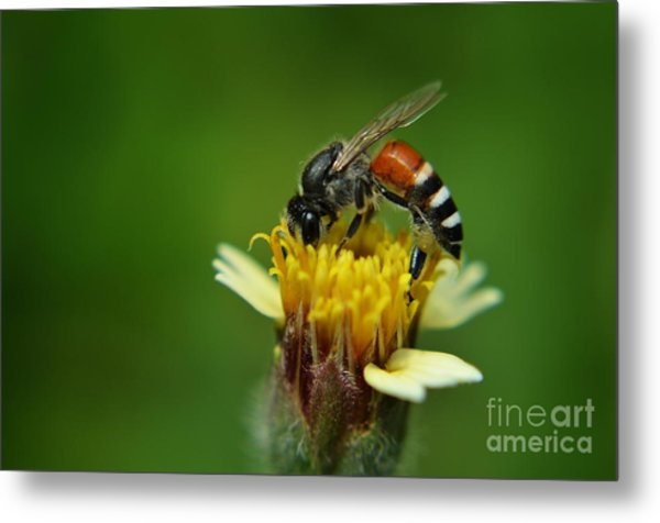 Working Bee Metal Print