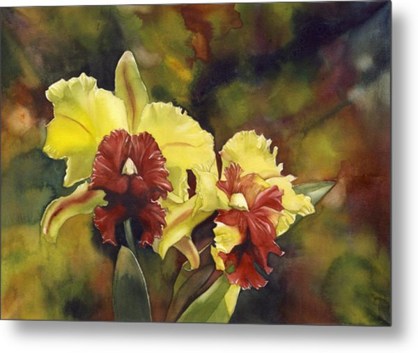 Yellow And Red Cattleya Orchids Metal Print
