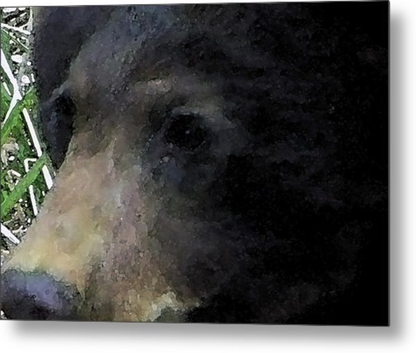 01042014 Black Bear Alaska Metal Print