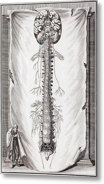 1731 Human Brain Spine Dissection Vesling Metal Print