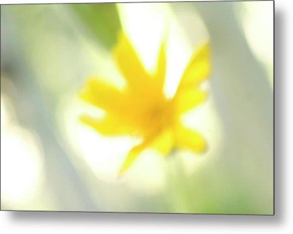 Abstract Of Wildflower In Early Morning Metal Print